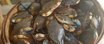 seaview crab company wilmington