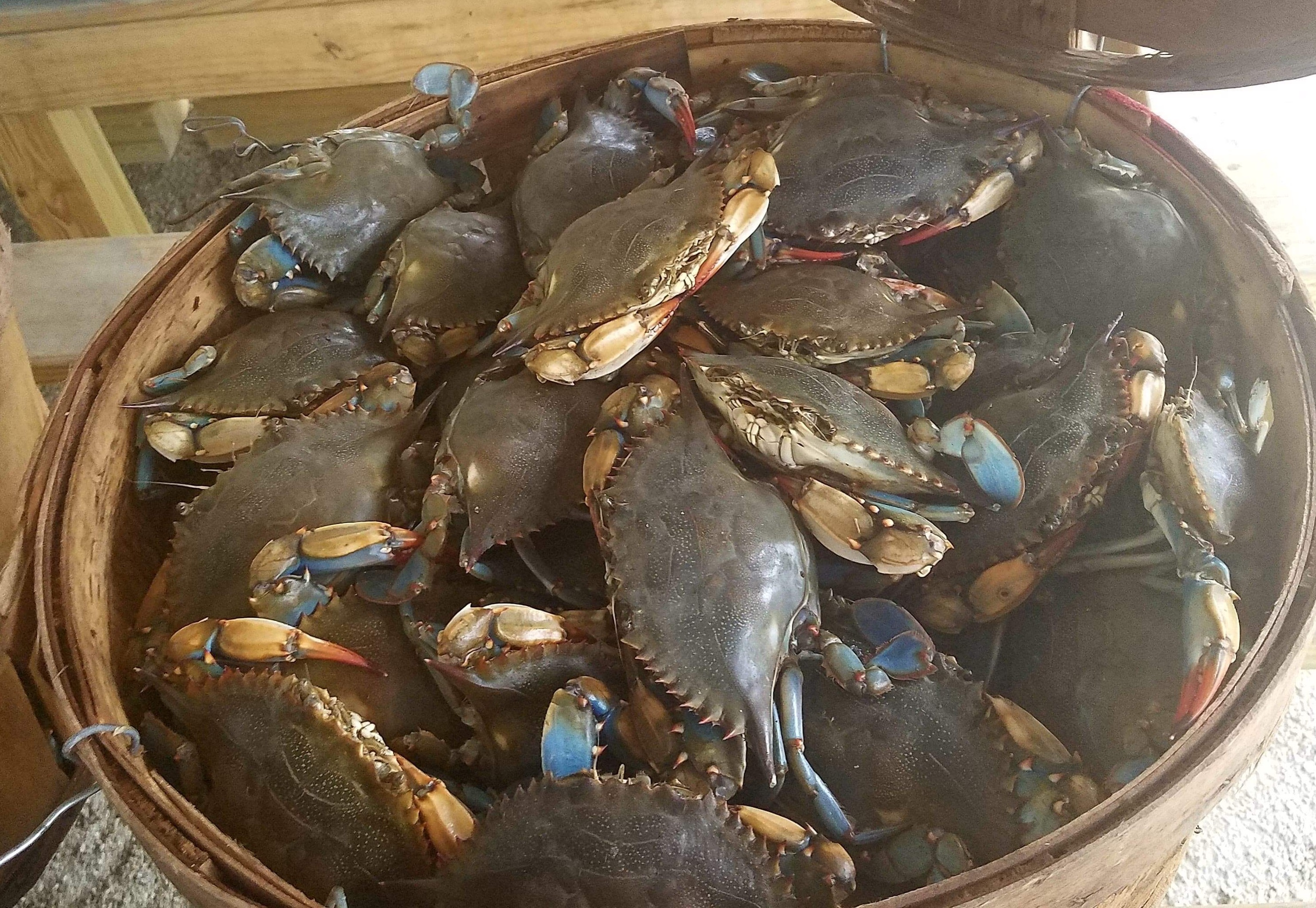 Seaview Crab Company Tempts Foodies with Fresh Seafood and Seasonal Produce