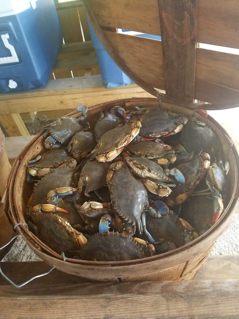 seaview crab company blue shell crab