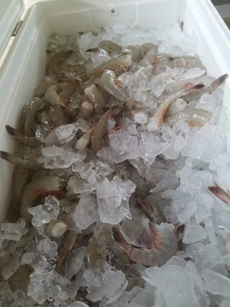 seaview crab company seafood
