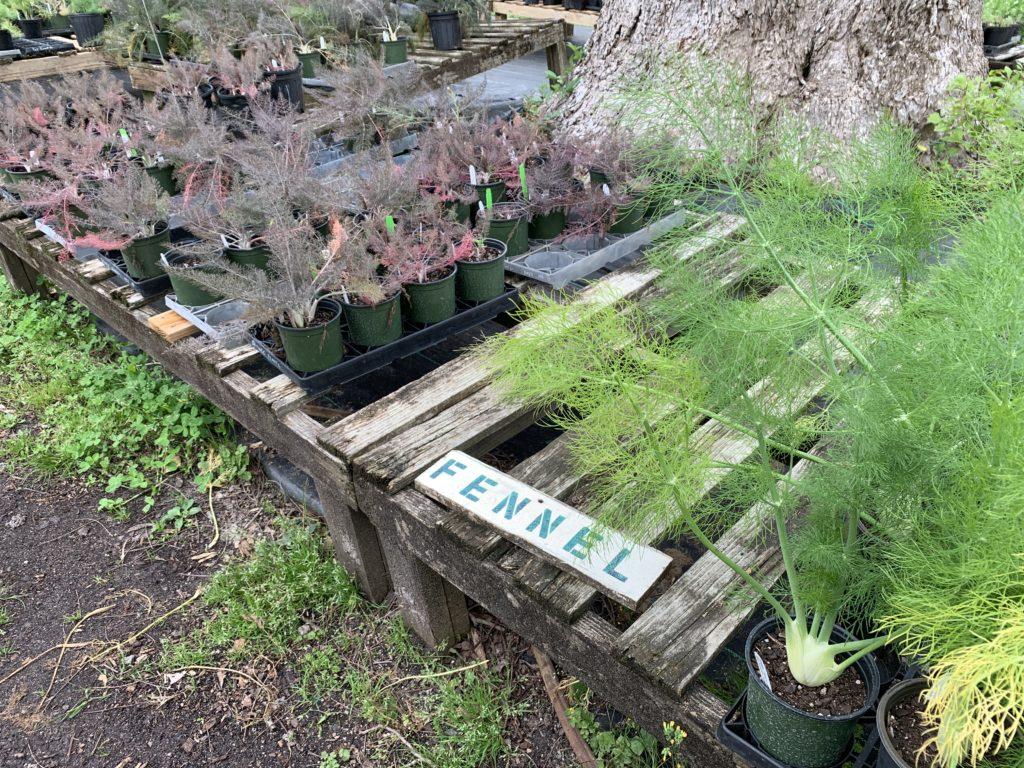 Kitchen Garden Heaven At Shelton Herb Farm Port City Foodie